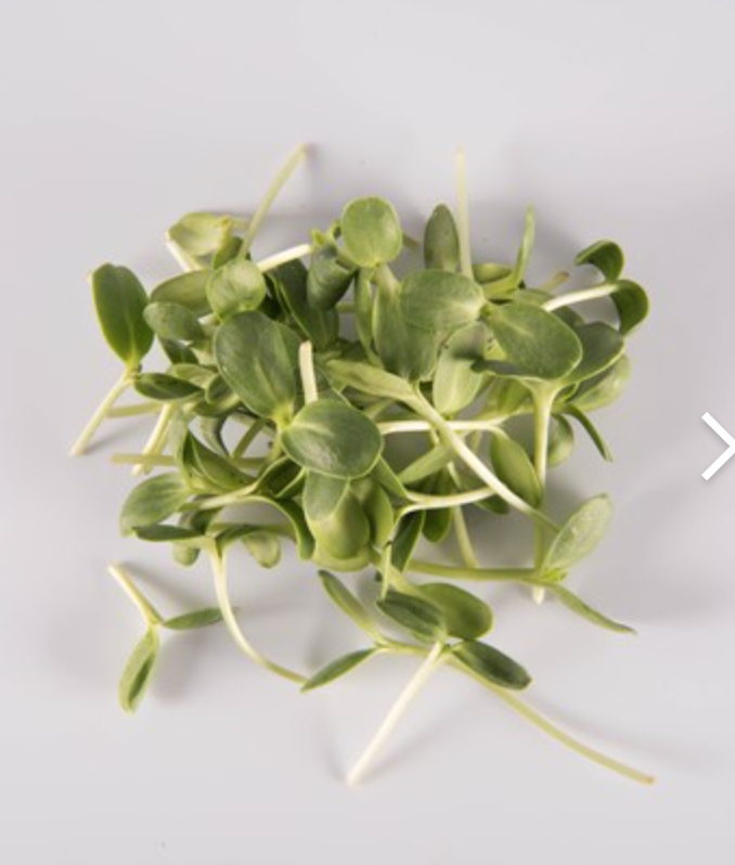 Sunflower Shoots  -