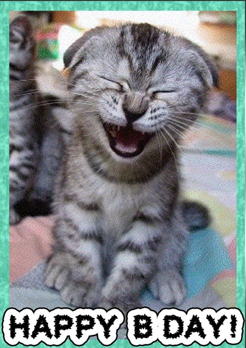 Laughing Cat Bday Card