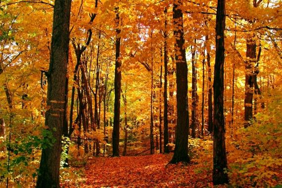 GC+Fall+Yoga+autumn-colors-1361908_0-1.jpg