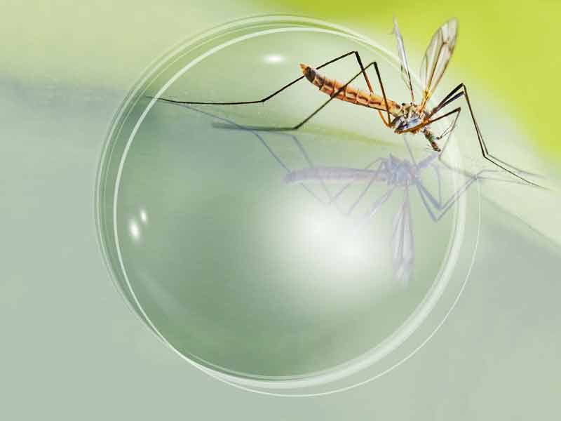 Mosquito Control - Microbide's larvicide kills mosquito larvae on contact and is biodegradable.