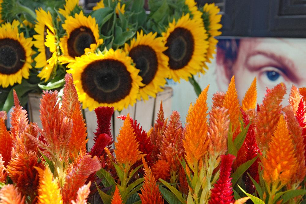 eye flowers.JPG
