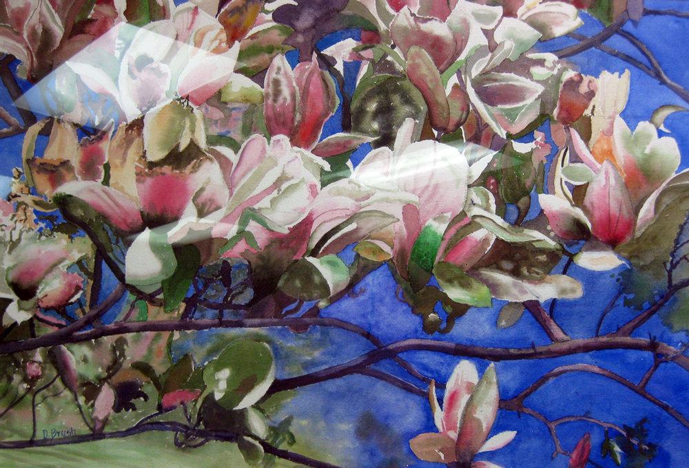 Brush, Dorothy - Magnolias