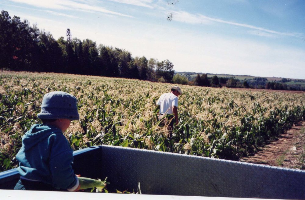 picking corn in Ford.jpg