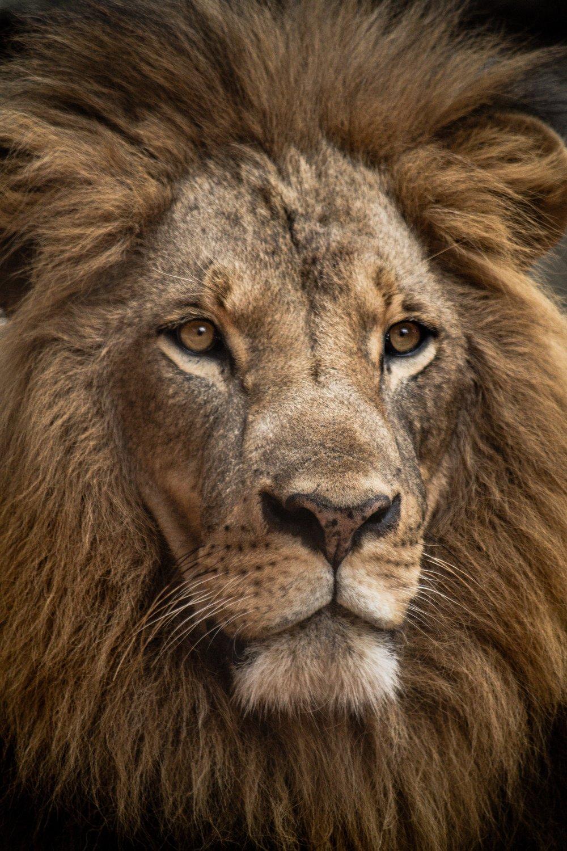 luke-tanis-454346-unsplash-Animal Orphanage Road, Nairobi, Kenya.jpg