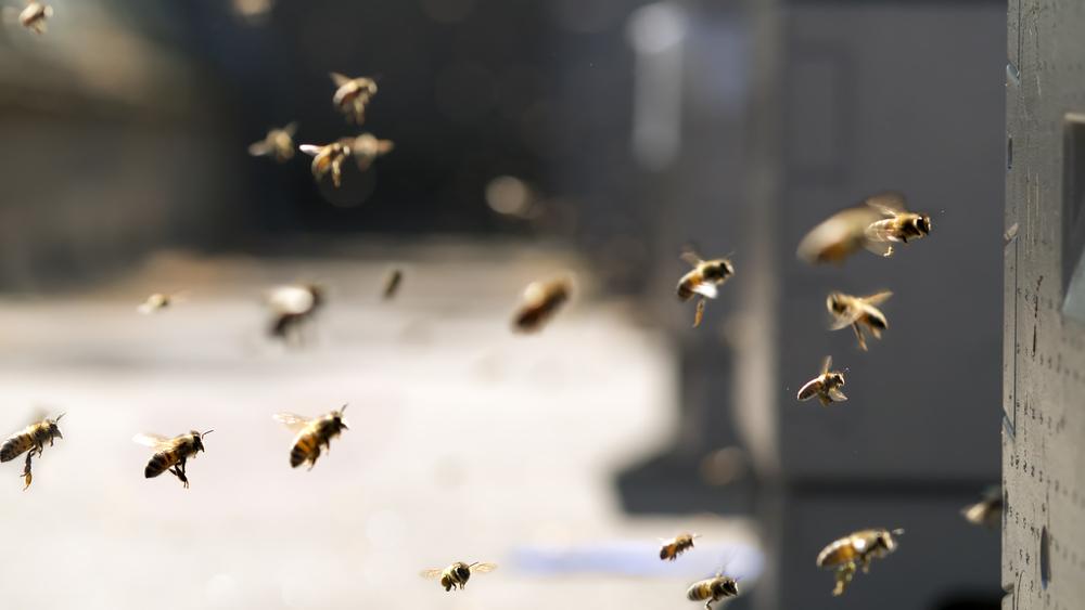 Do I have a wasp infestation?