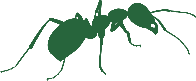 ants_large_icon.png
