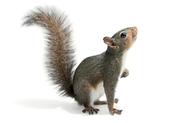 Squirrel Relocation