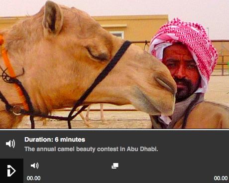 Camel Beauty Contest_BBC iPlayer.jpg