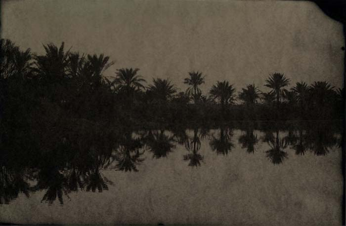 © Phil Nesmith - Palms, 2007