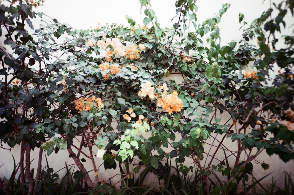 Jan 9 - Plants, Garhoud