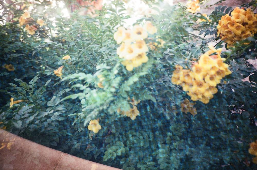 Jan 16 - Plants and Pool (Double Exposure)