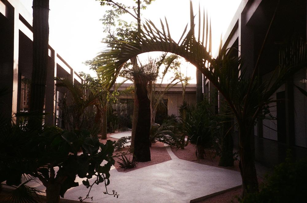 Jan 17 - Plants at Jameel Arts Centre