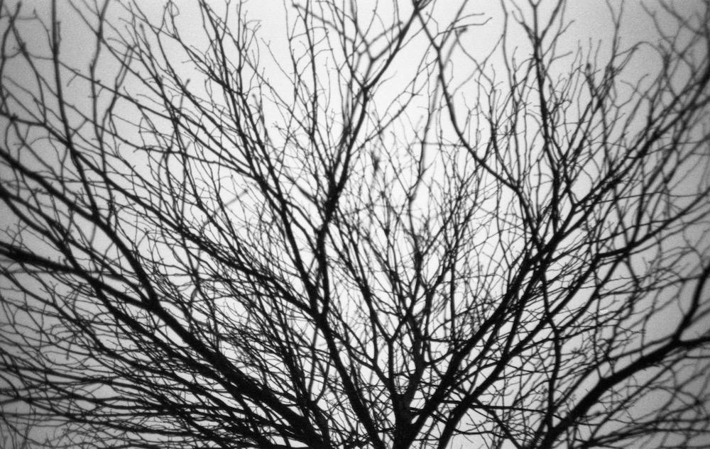 Feb 7 - Winter Tree, Berlin