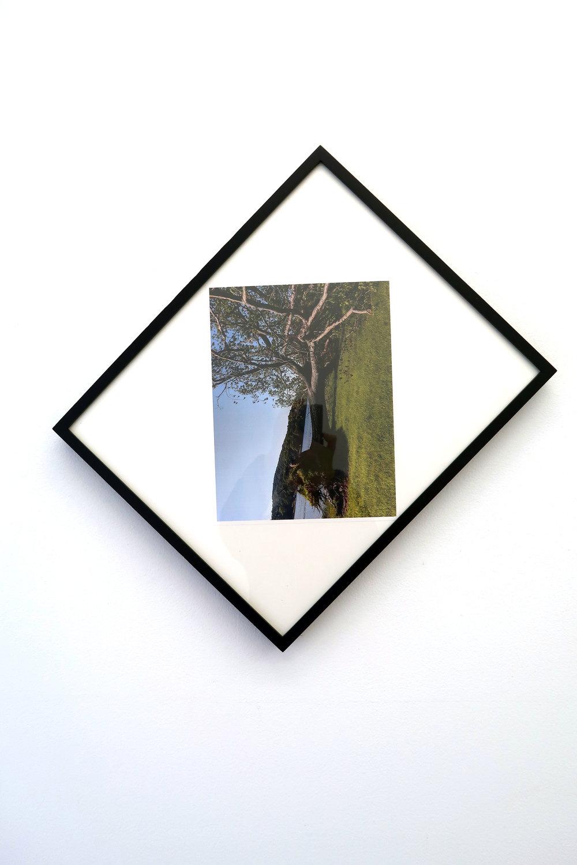 Richard Bloes . Fallen Tree Memory (2018)