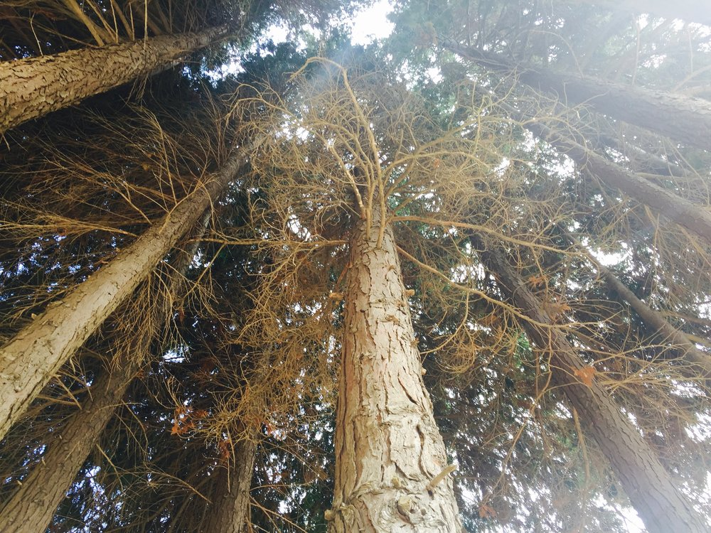 Seeing Cypresses with Catherine C.