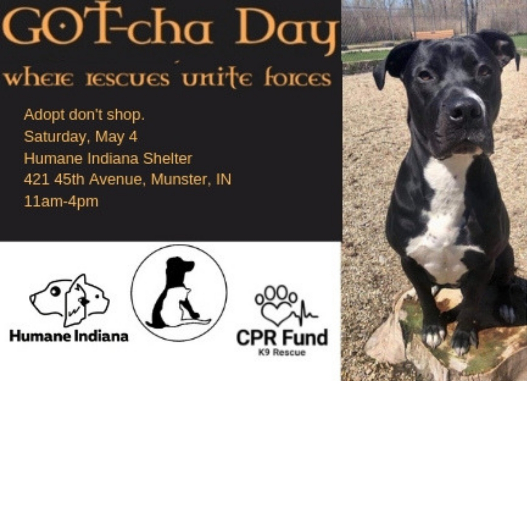 GOT-cha Day — Humane Indiana
