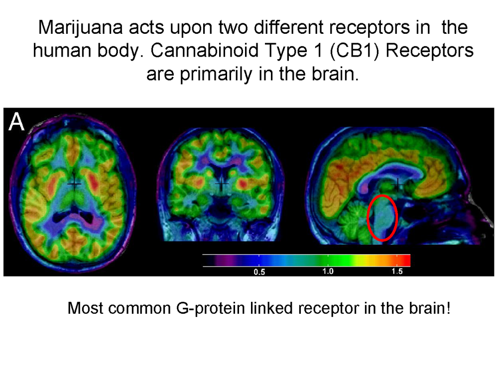 Science behind Medical Marijuana Oct_Page_04.png