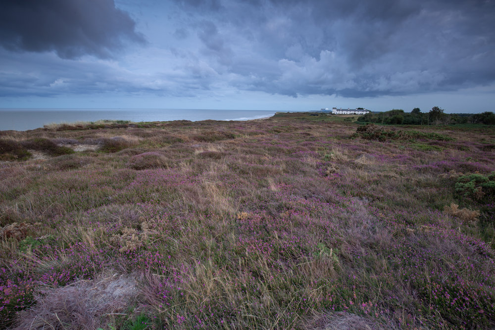 Littered Flowers, Dunwich Heath, Suffolk.
