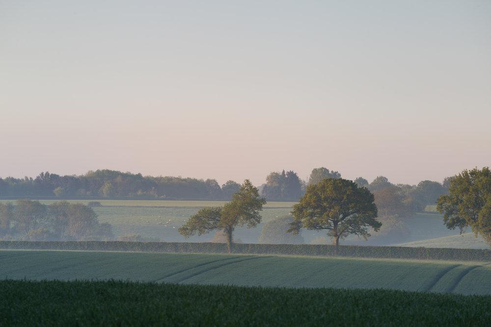 Keen as sheep, Kersey, Suffolk.