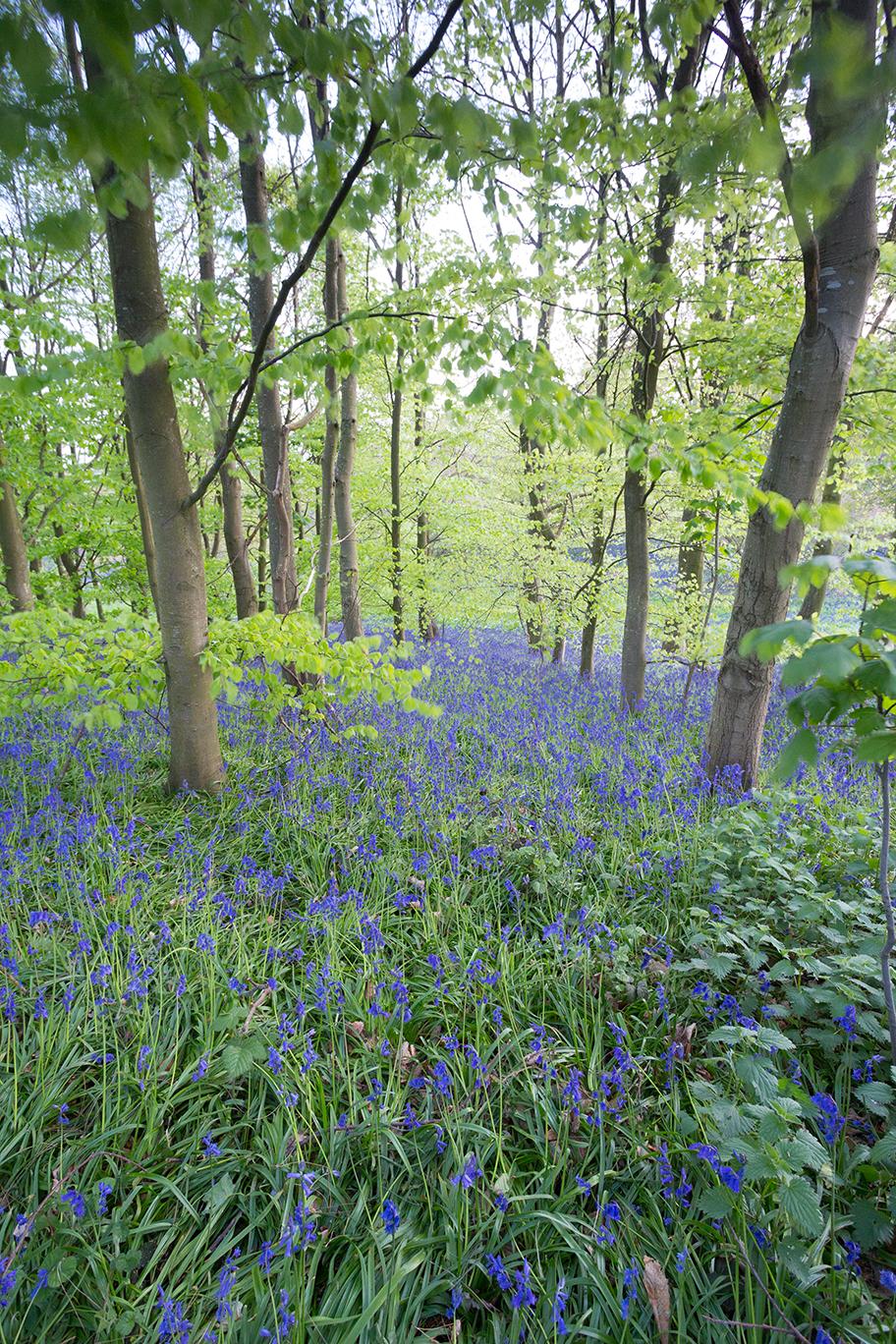 Blue Blue Blue, Nayland, Suffolk.