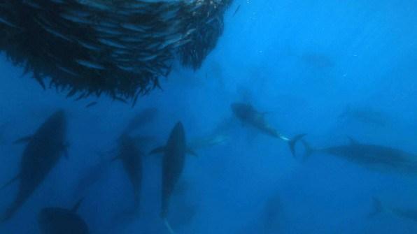 bluefin1.jpg