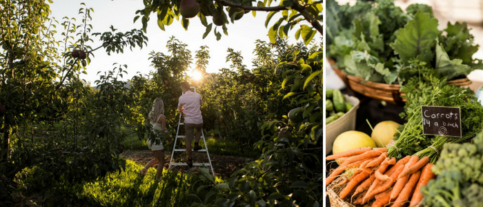 Picking Fruit & Farmers Market Credit: Destination BC