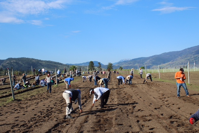Over a hundred volunteers get together every May to plant seeds for the initiative.