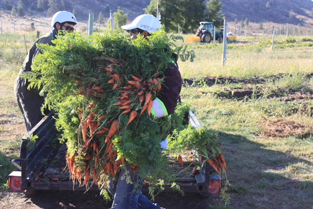 This year, Great Estates Okanagan will exceed 100,000 lbs of fresh produce donated since the program began 4 years ago.