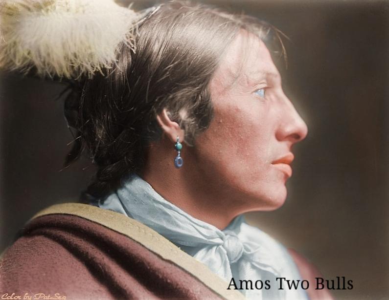 Amos two Bulls.png