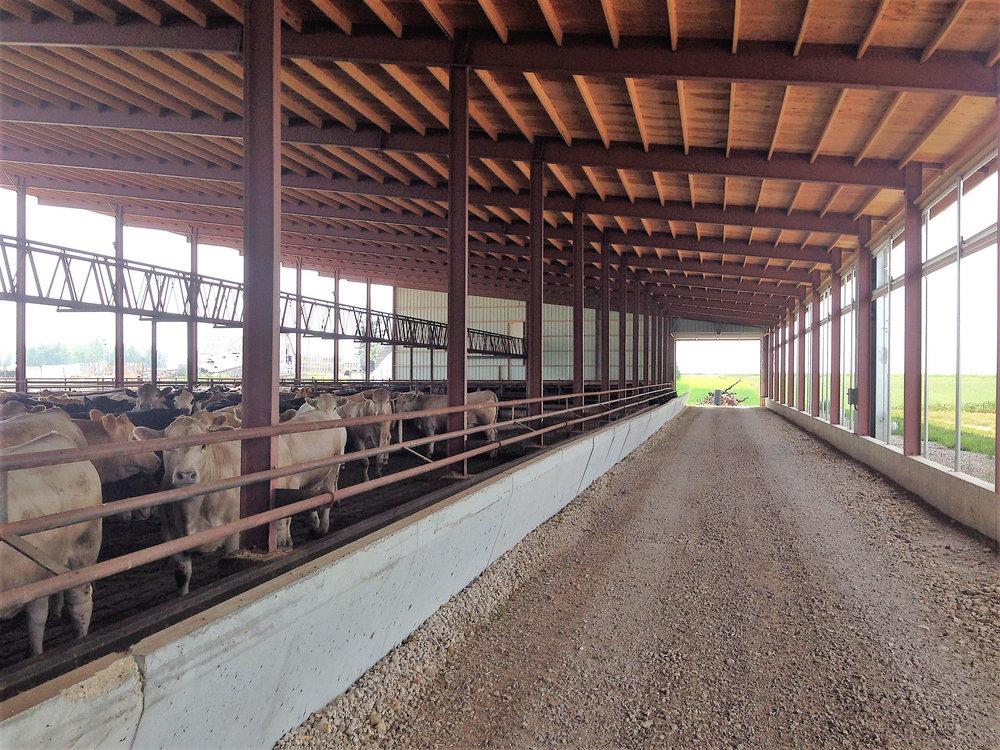 cattle barns l agristeel agristeel35 web jpg