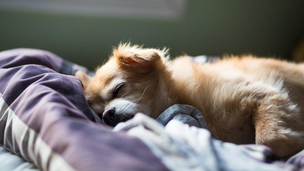 dogsleeping.jpeg