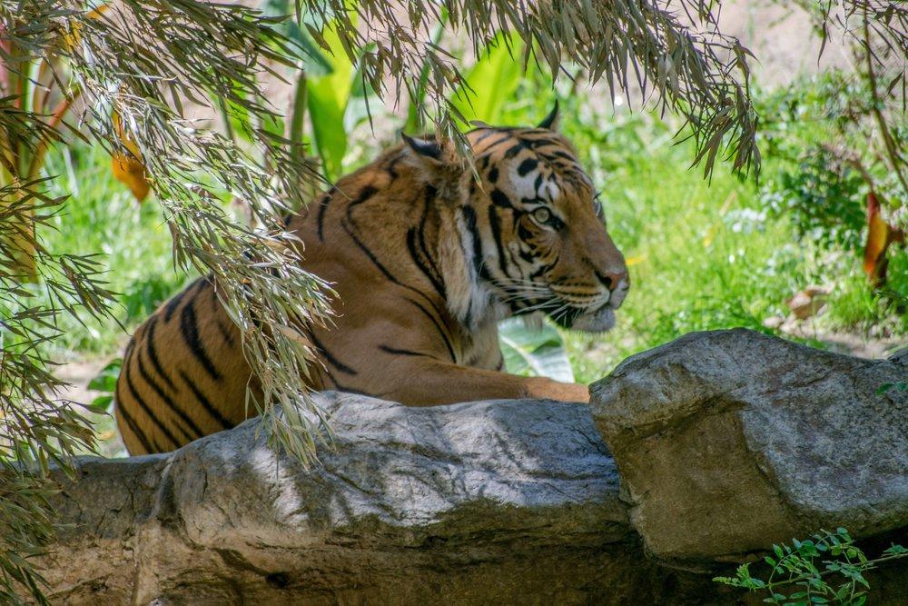 Monday Stuff, The San Diego Zoo | shutupeatthis.com