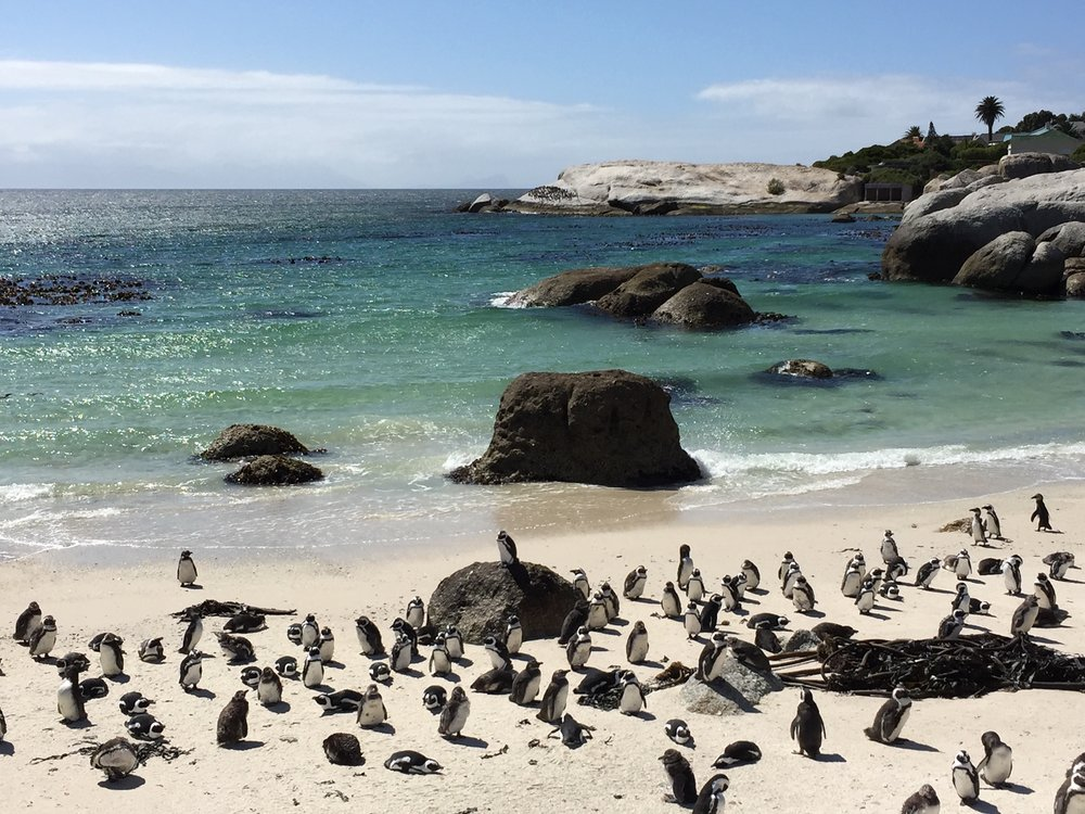 Boulder Beach en route to the Cape of Good Hope