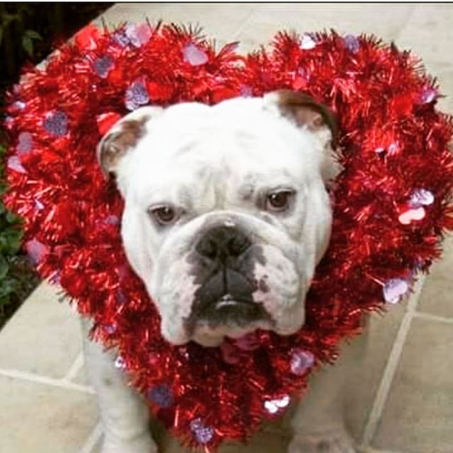 Happy Valentine's Day! Take #care of the people you #love  #valentine #furbaby