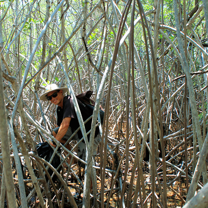 Mangrove Explorer - We take a small river boat up the estuary in Las Baulas National Park to experience the mangrove firsthand while learning about its importance in buffering storms, slowing erosion, and creating a nursery habitat for marine species to grow.