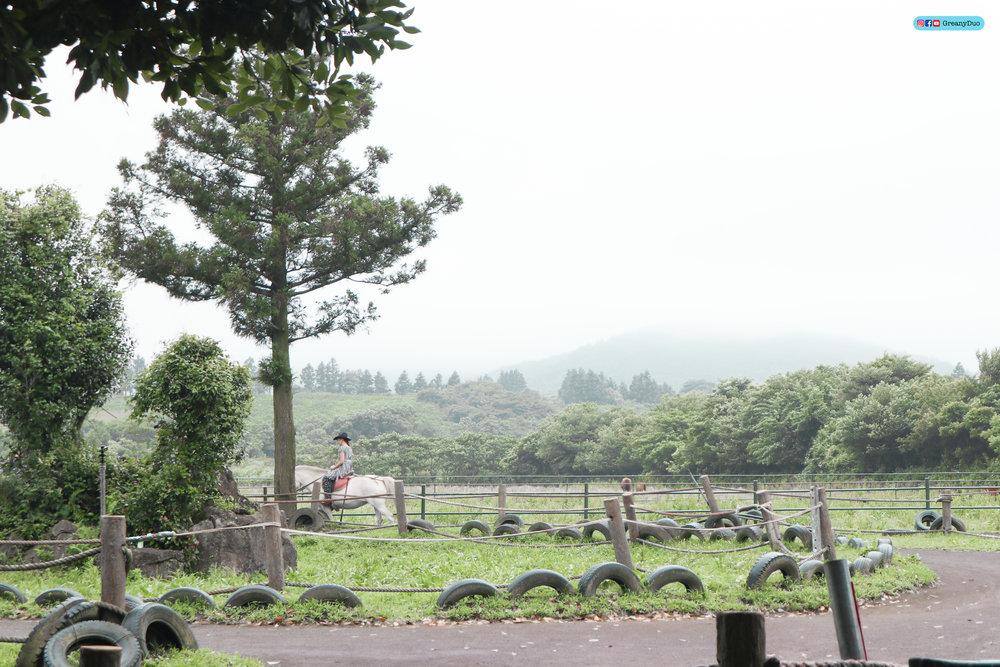 klook eastern jeju island tour, riding horse