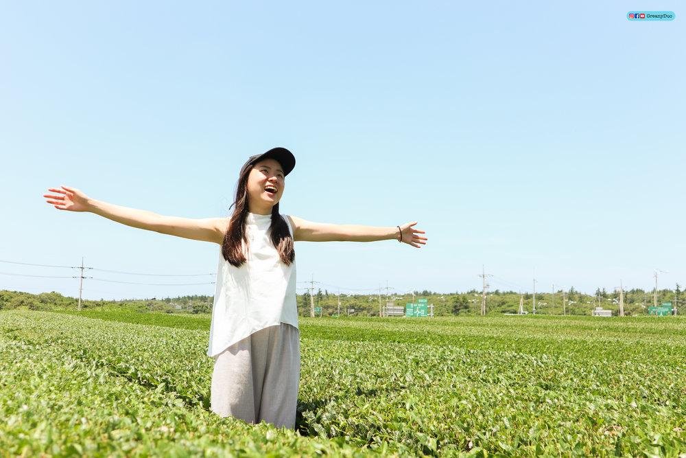 klook western jeju island tour, o'sulloc green tea garden