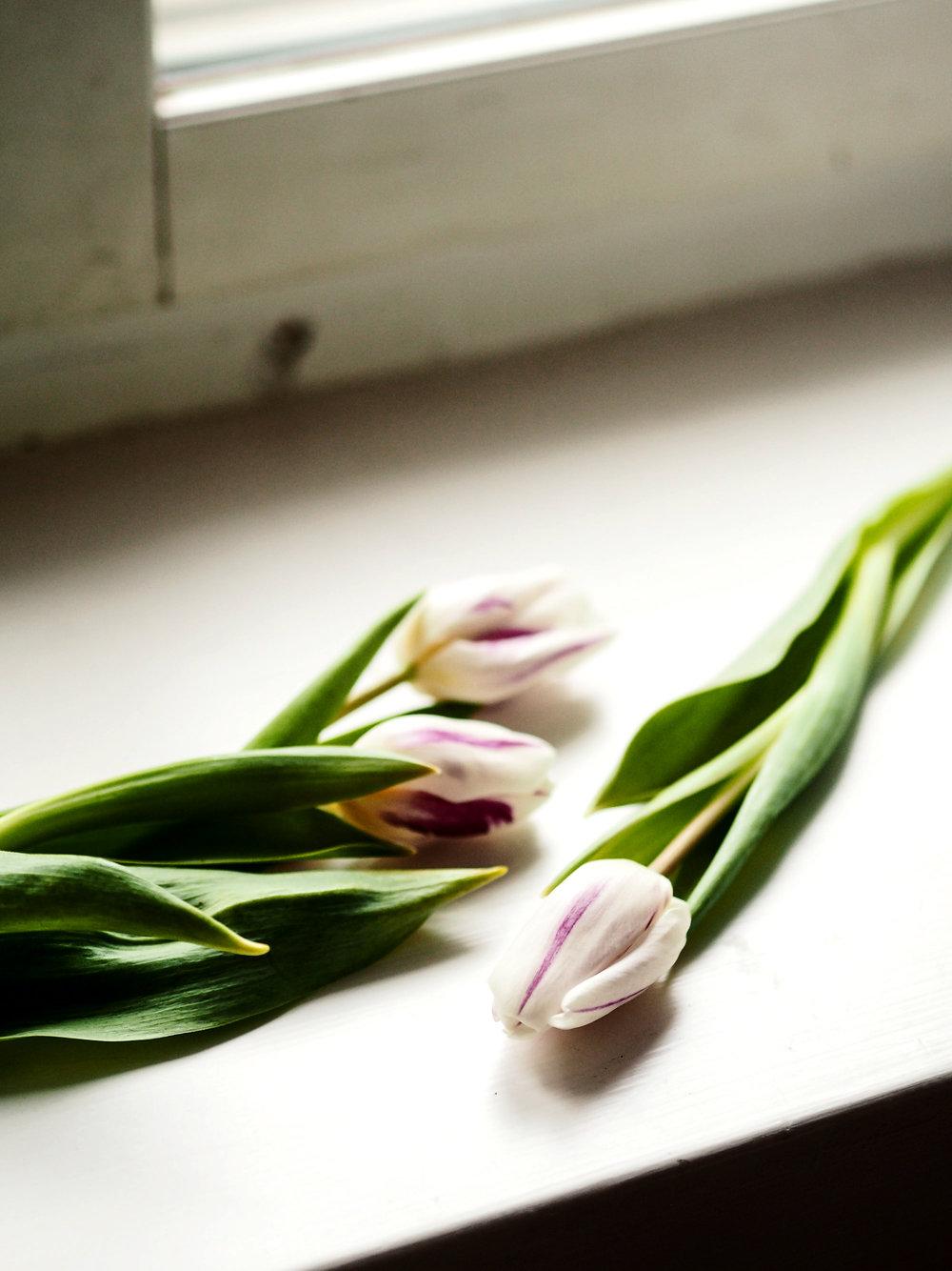 Hollantilaisten tulppaanimanian aikana raidalliset lajikkeet olivat himotuimpia ja niistä maksettiin päättömiä summia. Vasta satoja vuosia myöhemmin selvisi, että raidan tulppaanin terälehden väriin aiheuttaa virus kukkasipulissa.