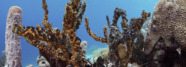 Bonaire-VITB-Underwater-Images-DSC_8658_crop.jpg