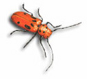 insect_sq_beetle.jpg