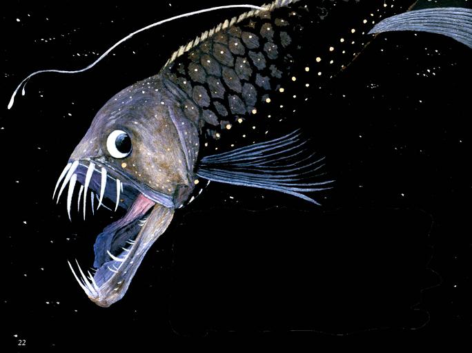 Viperfish_000.jpg