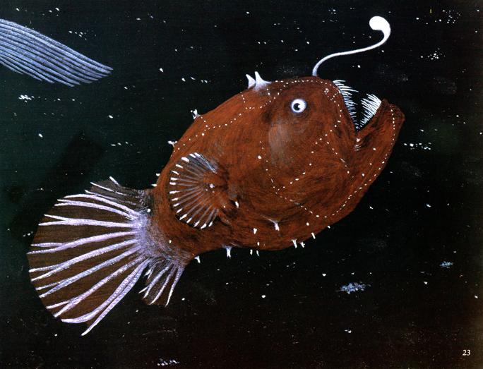 Anglerfish_000.jpg