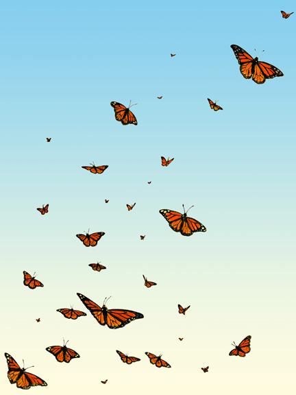 flyingmonarchs_001.jpg