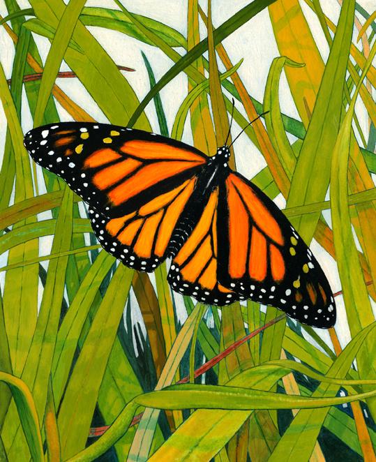 MonarchinGrass_003.jpg