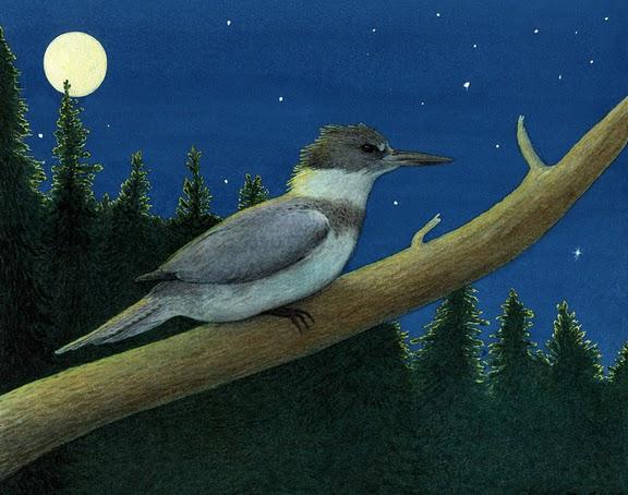 Kingfisher_002.jpg