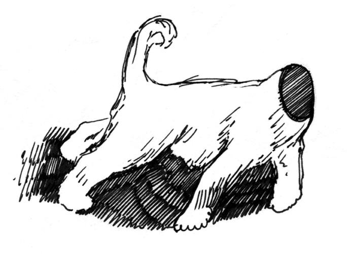 023 Headless dog.jpg