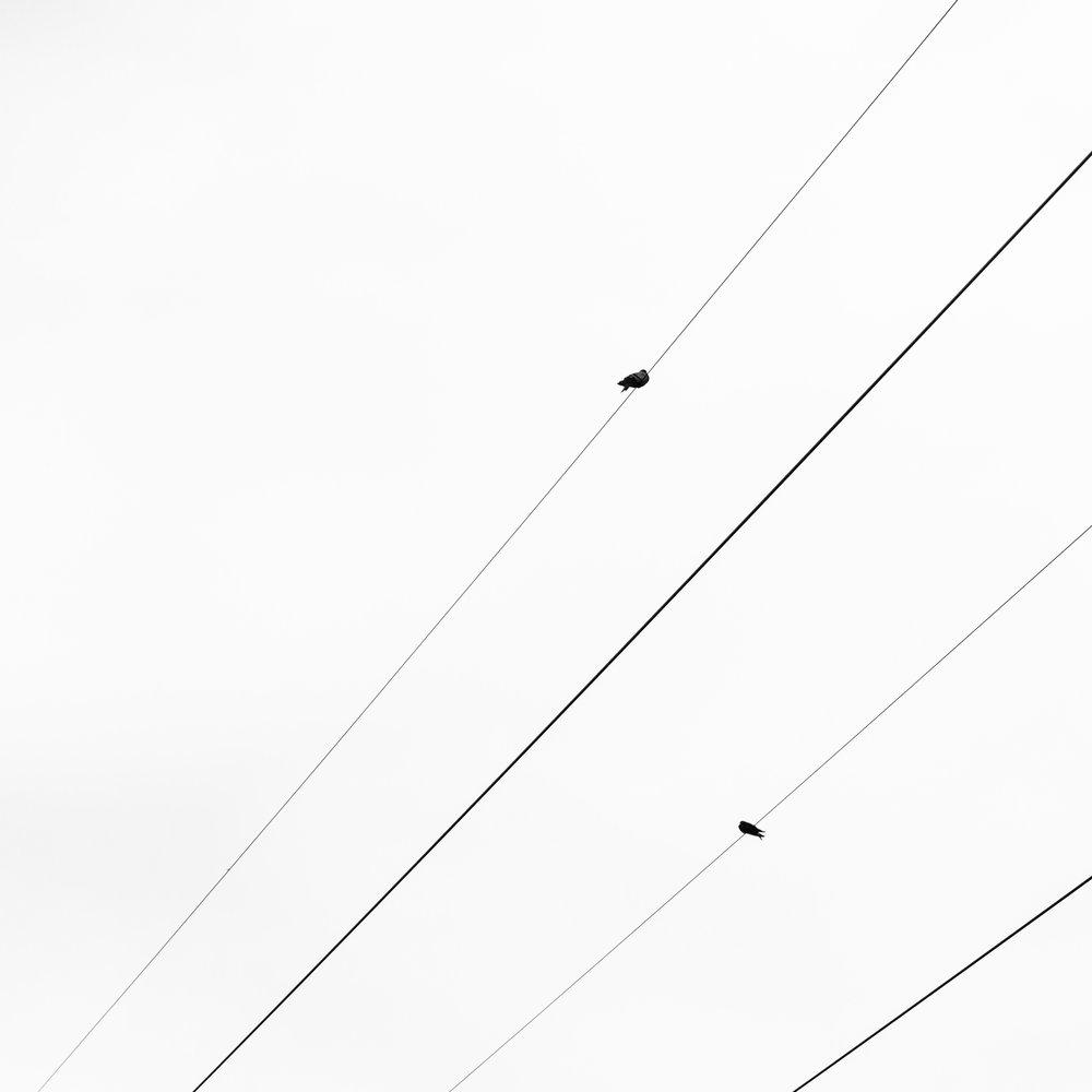 4 Wires, 2 Birds  2018