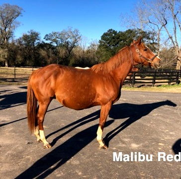 Malibu+Red.jpg