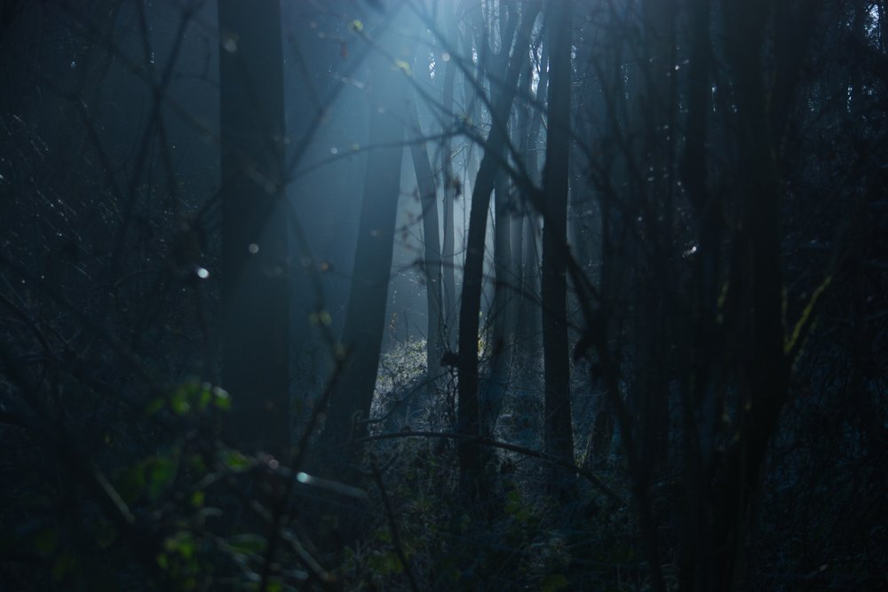 backlit-creepy-dark-289367.jpg