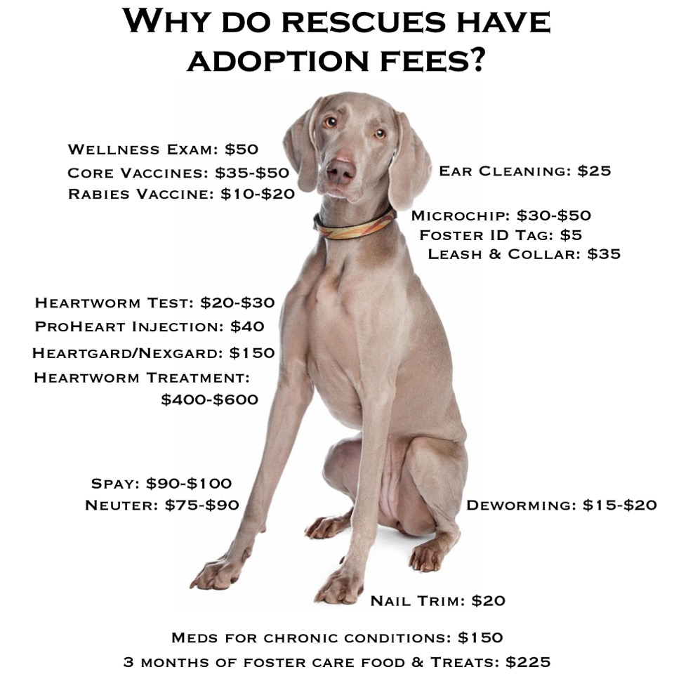 Adoption Fees Chart.jpg
